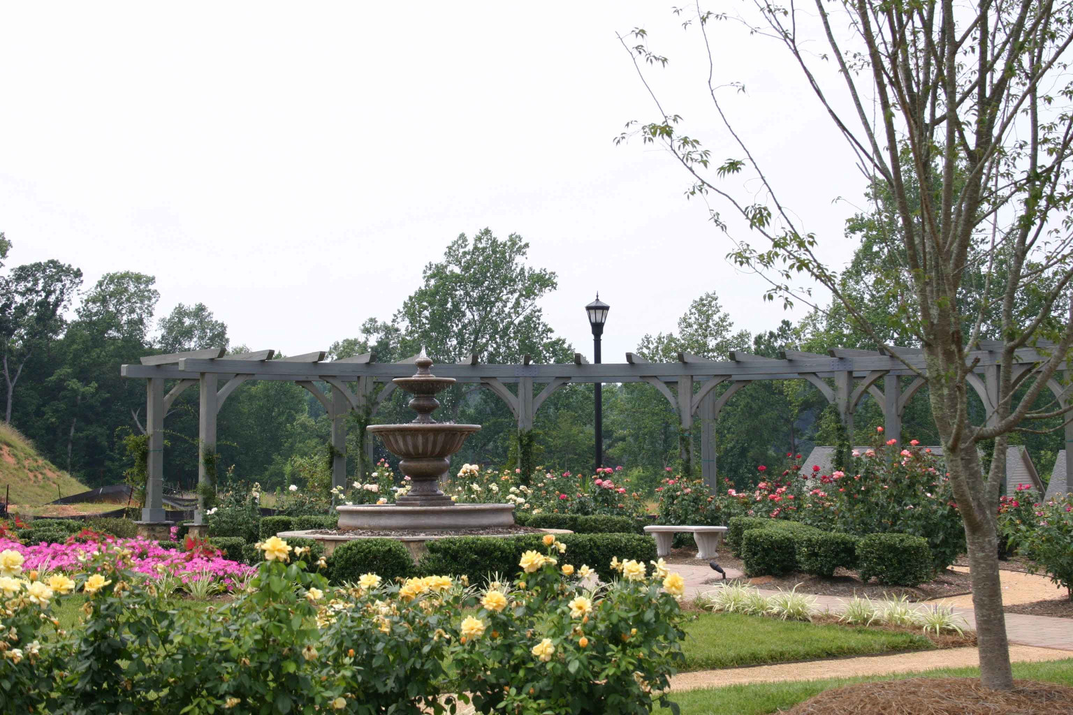 This wood arbor was custom designed for this rose garden.